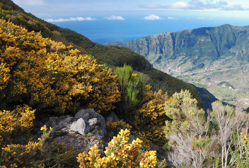 Valley on Madeira, Portugal royalty free stock images