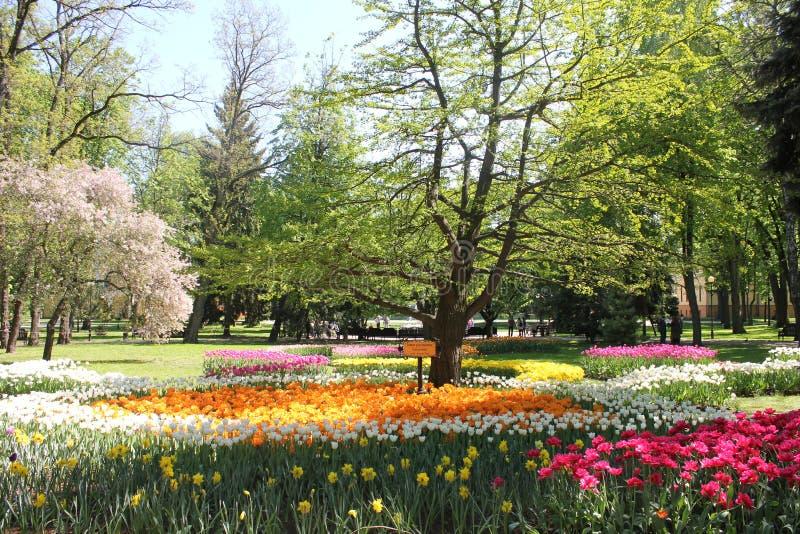 Valley tulip royalty free stock photos