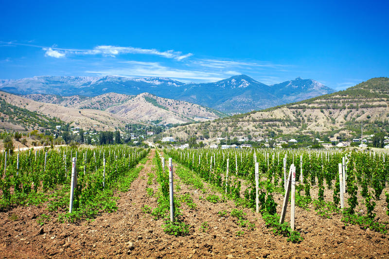 A valley of vineyards