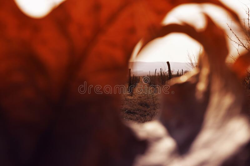 Valley with vineyards framed by a leaf. Rows of grapes with distant mountains on the horizon. royalty free stock images