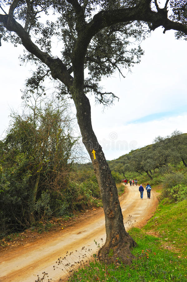 Vallfärdar i Mozarabicen Camino de Santiago, Cerro Muriano, landskap av Cordoba, Andalusia, Spanien arkivfoton
