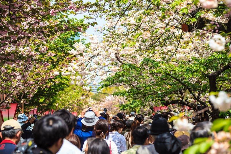 Vallgrav och körsbärsröda blomningar av Kyoto royaltyfri foto