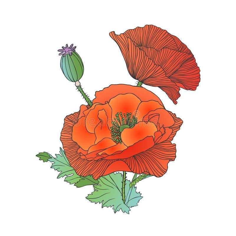 Vallmo blommar på vit bakgrund stock illustrationer
