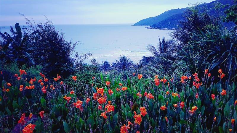 Vallmo bredvid havet i Da Nang Vietnam arkivbild