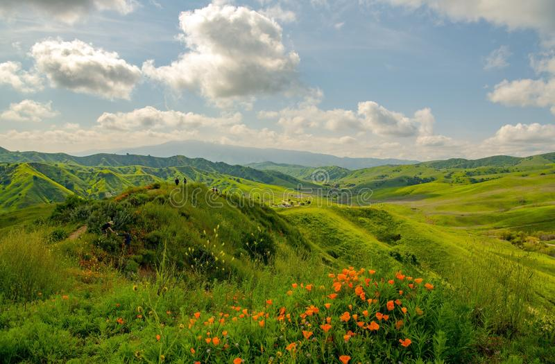 Vallmo och gröna kullar för vår på en härlig dag royaltyfri fotografi