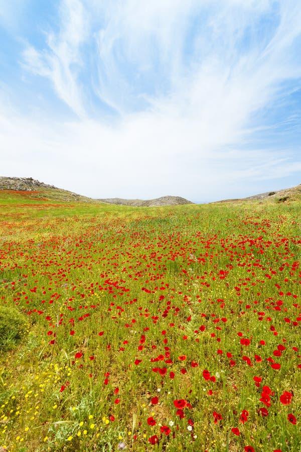 Vallmofält av Prevelhi royaltyfri fotografi