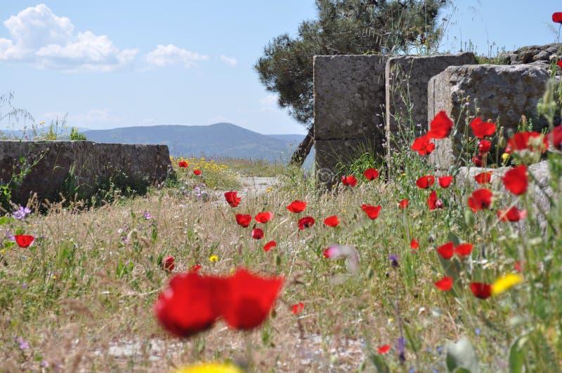 Vallmofält av Turkiet royaltyfria bilder