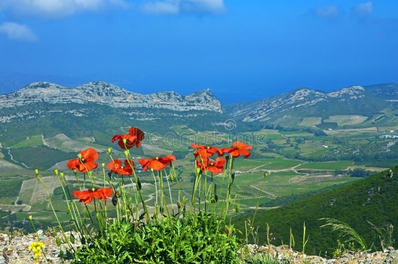 Vallmor ovanför Patrimonio, Corsica royaltyfri foto