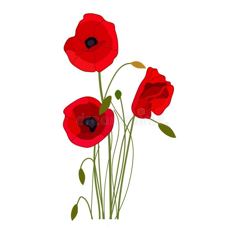 Vallmovektorsymbol på en vit bakgrund Blommaillustration som isoleras p? vit Realistisk stildesign för vildblommor vektor illustrationer