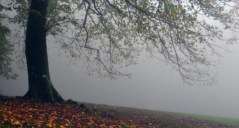 Vallombrosa стоковое изображение
