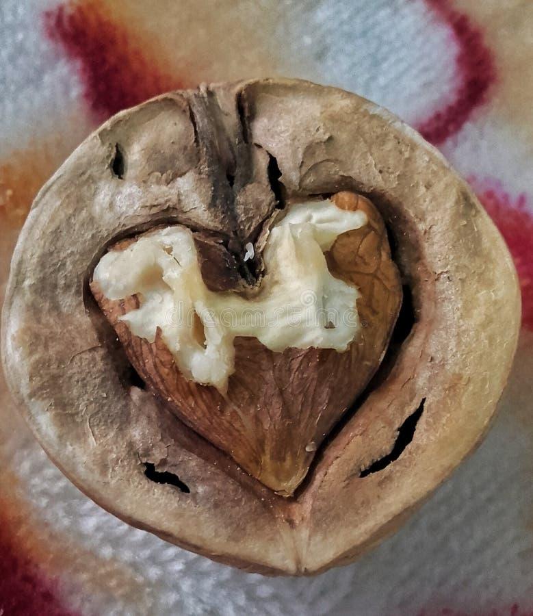 Valnöt som är sprucken i hjärtaform royaltyfria foton
