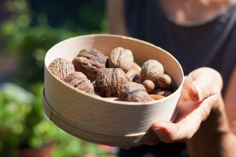 Valnötter i en rund träask royaltyfria foton