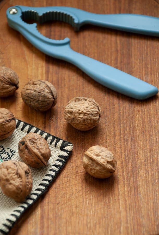 Valnötter med den blåa nötknäpparen royaltyfri bild