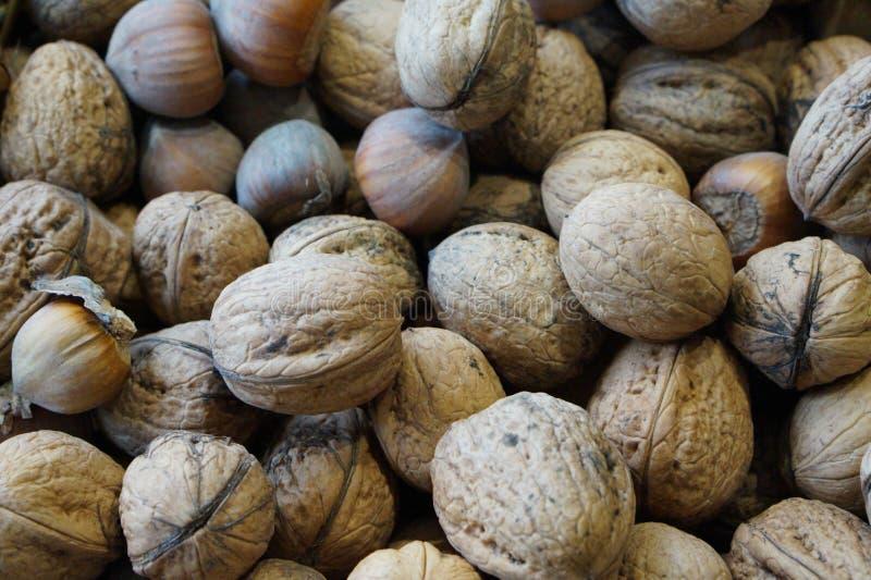 Valnötter och hasselnötter royaltyfria foton