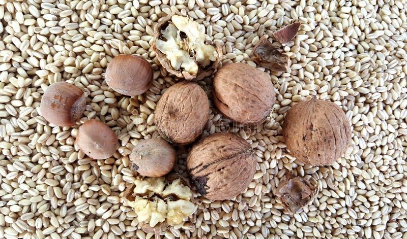 Valnötter och hasselnötter på vetefrö royaltyfri bild