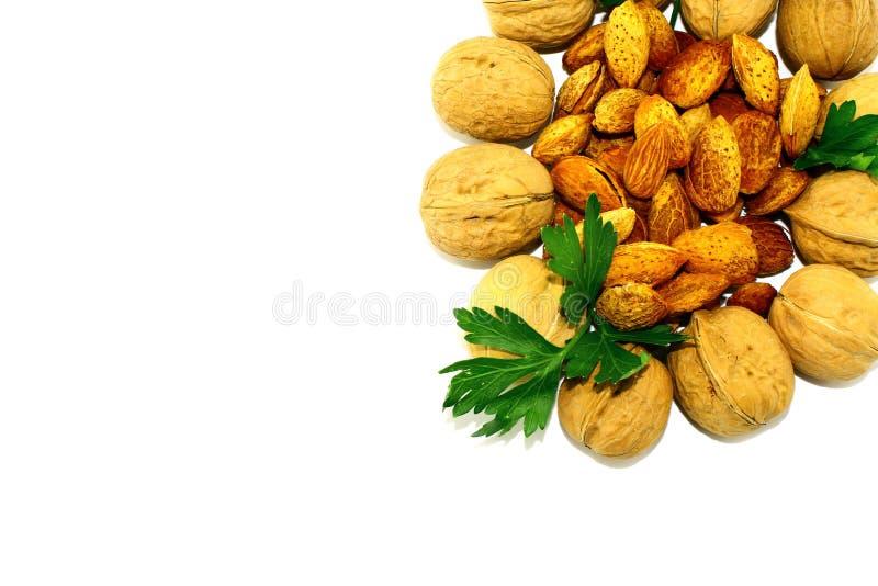 Valnötter och mandlar med persilja på vit bakgrund royaltyfria bilder