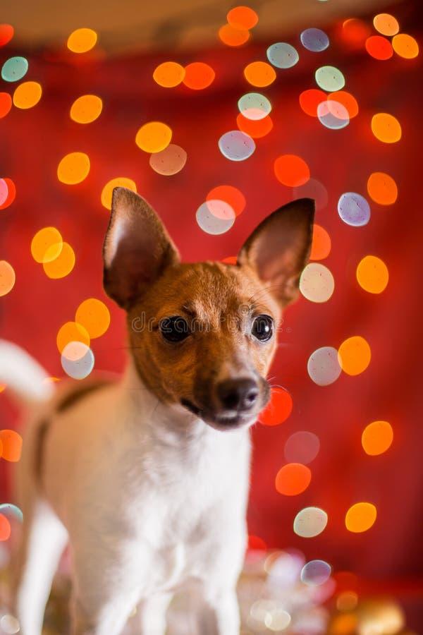 Valp för foxterrier för hundavelleksak arkivfoton