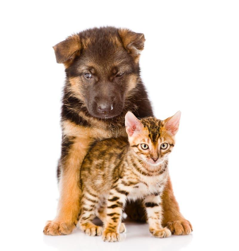 Valp för tysk herde och bengal kattunge som ser kameran arkivfoto