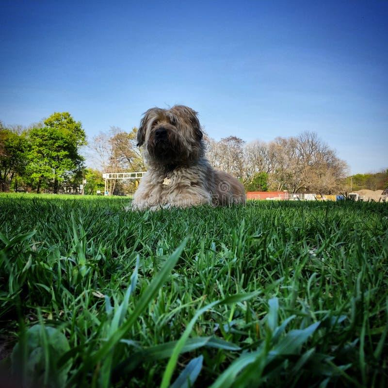 Valp i parken fotografering för bildbyråer