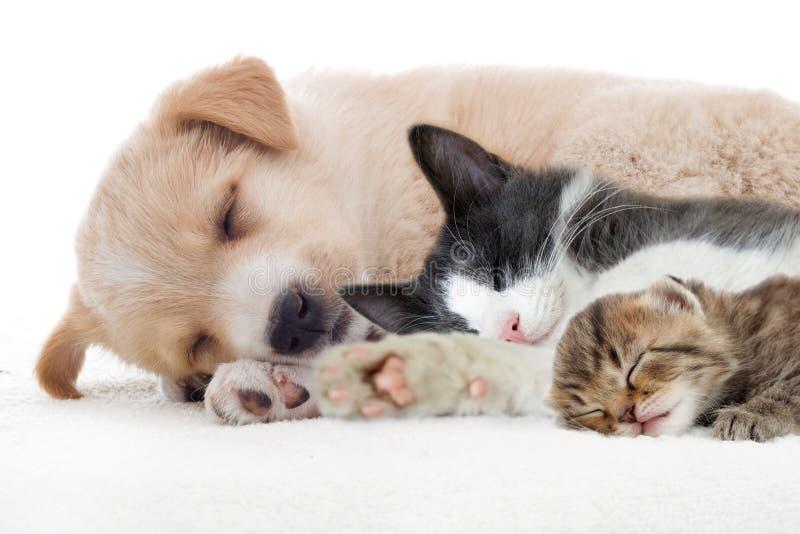 Valp- och kattungesömnar royaltyfri foto