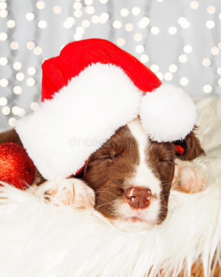Valp som bär Santa Hat While Napping On päls royaltyfria bilder