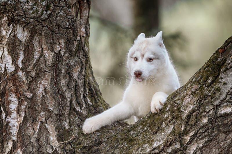 valp Stående på trädet i utomhus- royaltyfria foton