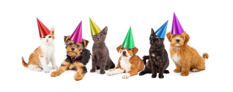 Valpar och kattungar i partihattar royaltyfri foto