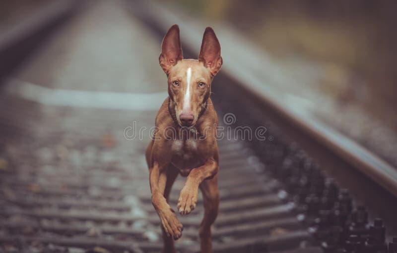 Valpcirnecokörningar på järnvägen arkivfoto