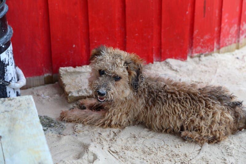 Valpen ligger på sanden på stranden royaltyfri foto