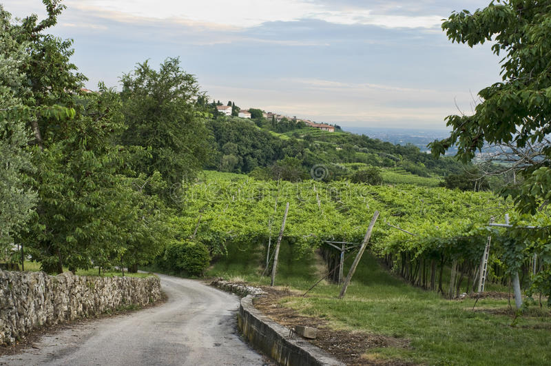 Valpolicella Vineyards in Veneto, Italy royalty free stock image