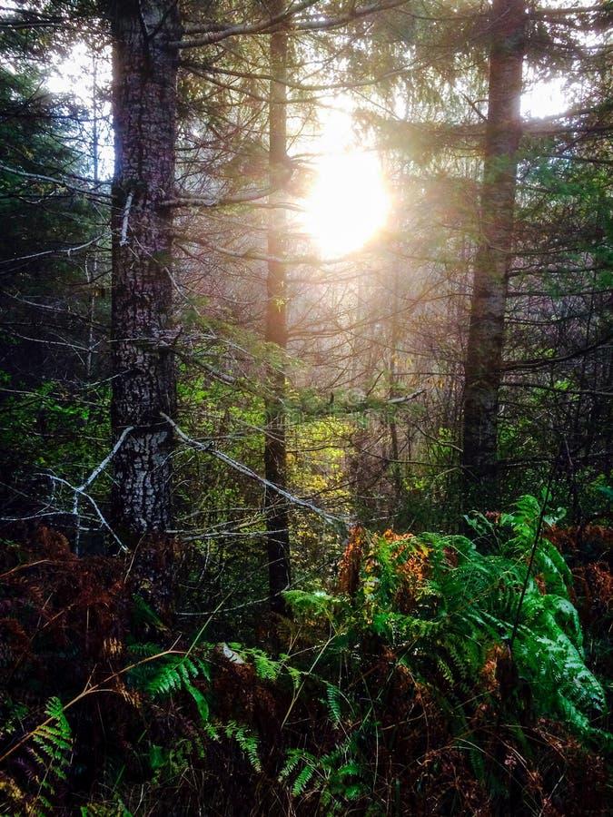 Valsetz, Oregon fotografia royalty free