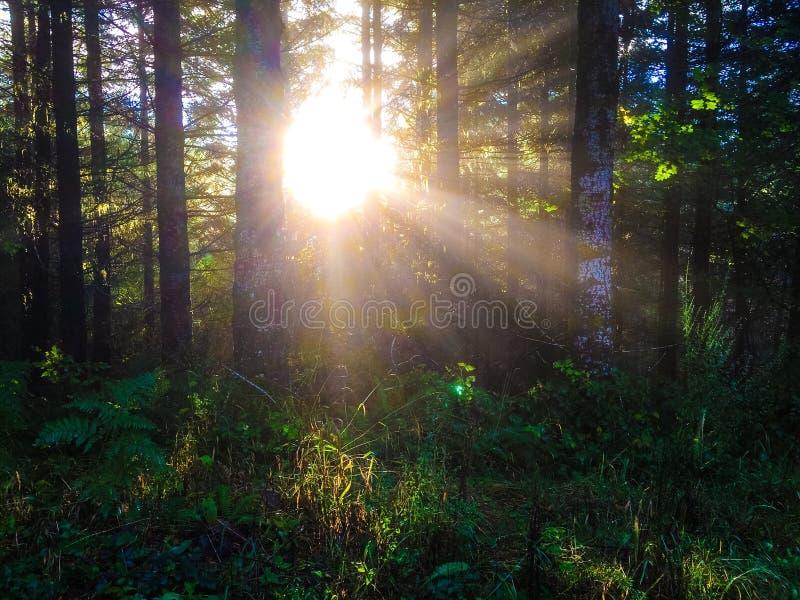Valsetz, Oregon zdjęcie stock