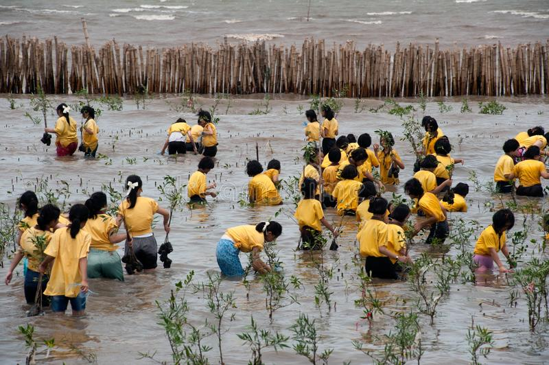 Thai Students Volunteer working on plant young mangroves trees. stock photography