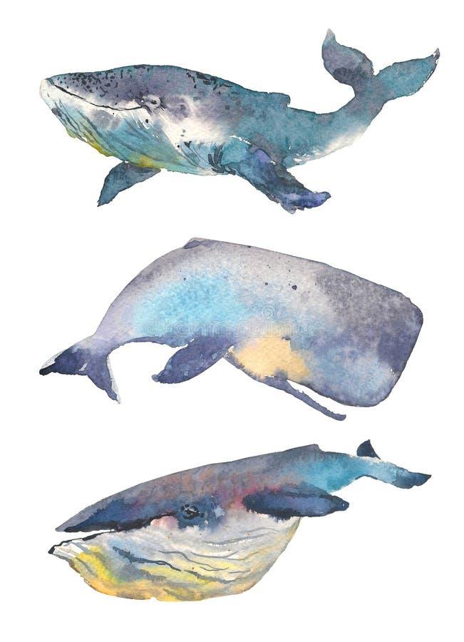 Valuppsättning colors härlig blur för djur bakgrund havet för bläckfisken för den croatia fokusfotoen det octpous olikt mycket Va stock illustrationer