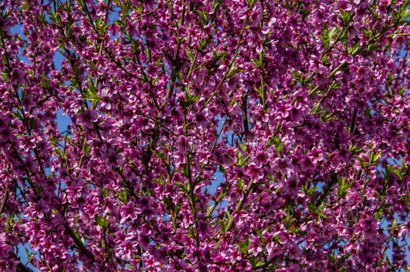 Vampata dei fiori fotografie stock