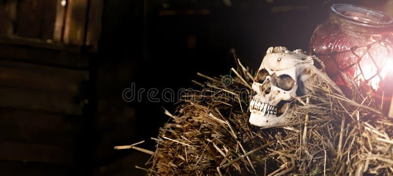Vampire Skull on straw heap and candle lamp - Halloween. Dark Halloween scene stock photos