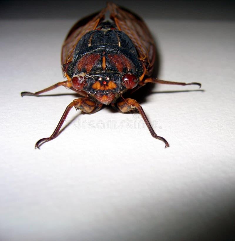 Van aangezicht tot aangezicht met een insect