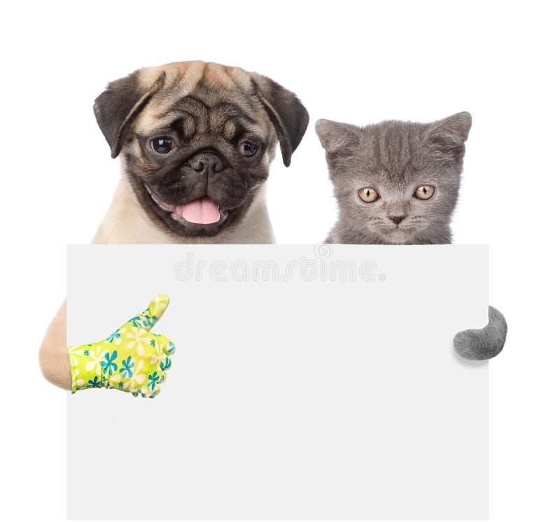 Van achter lege raad gluren en kat en Hond die beduimelen omhoog de de tonen Geïsoleerdj op witte achtergrond stock foto's