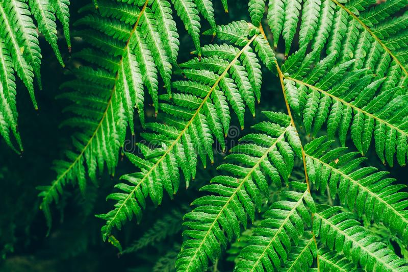 Van achtergrond wildernisinstallaties tropisch bladerenpatroon Tropische struikgewas en struiken in de wildernis stock afbeeldingen