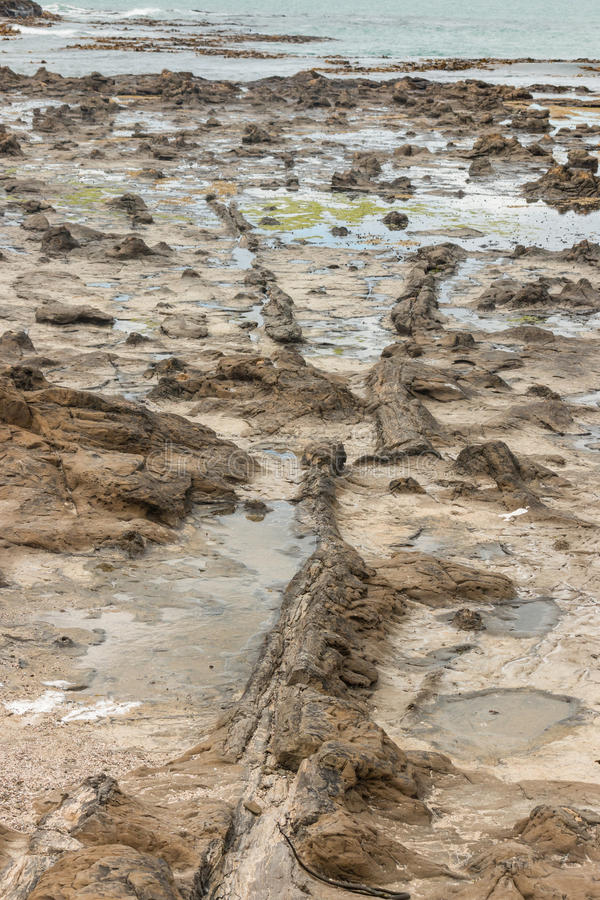 Van angst verstijfd bos in Curiosumbaai stock fotografie