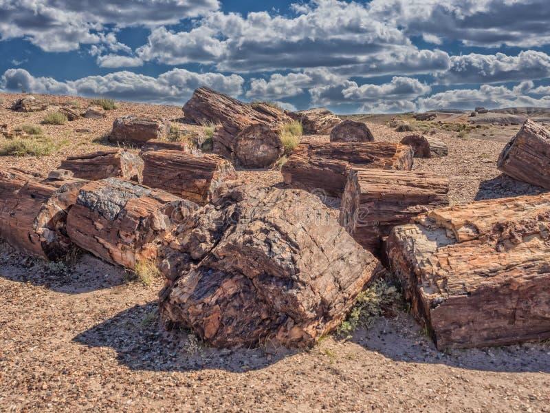Van angst verstijfd Bos dichtbij Holbrook, Arizona stock afbeeldingen