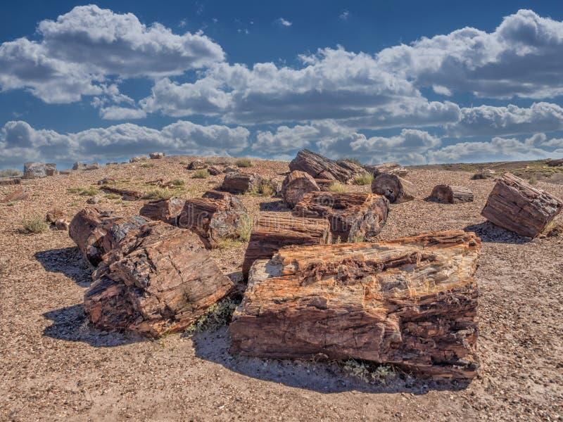 Van angst verstijfd Bos dichtbij Holbrook, Arizona stock foto