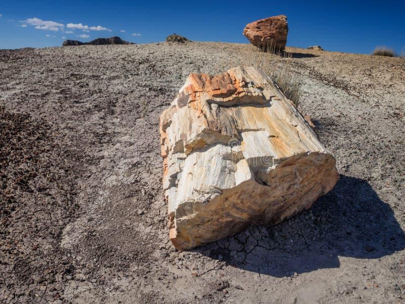 Van angst verstijfd Bos dichtbij Holbrook, Arizona royalty-vrije stock foto's