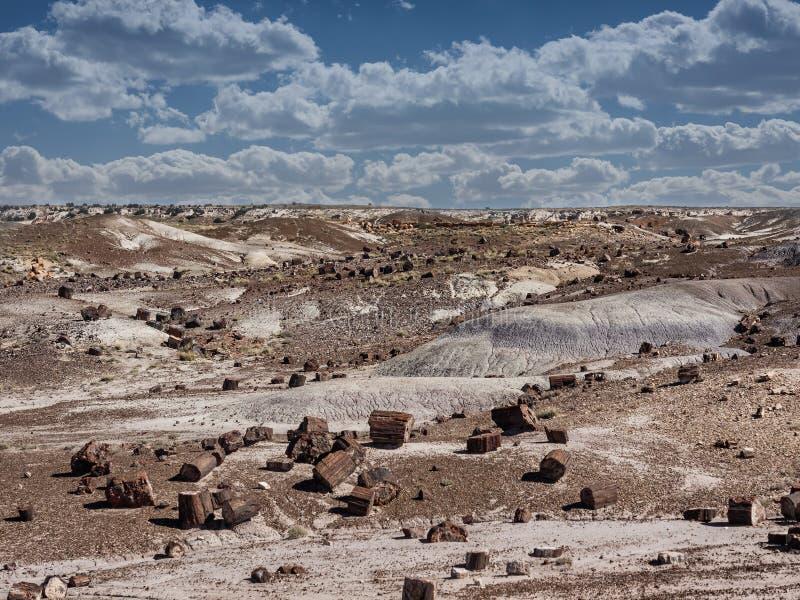 Van angst verstijfd Bos dichtbij Holbrook, Arizona stock foto's