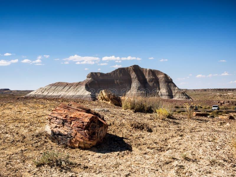 Van angst verstijfd Bos dichtbij Holbrook, Arizona stock afbeelding