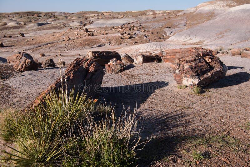 Van angst verstijfd Forest National Park, Holbrook, Arizona stock foto