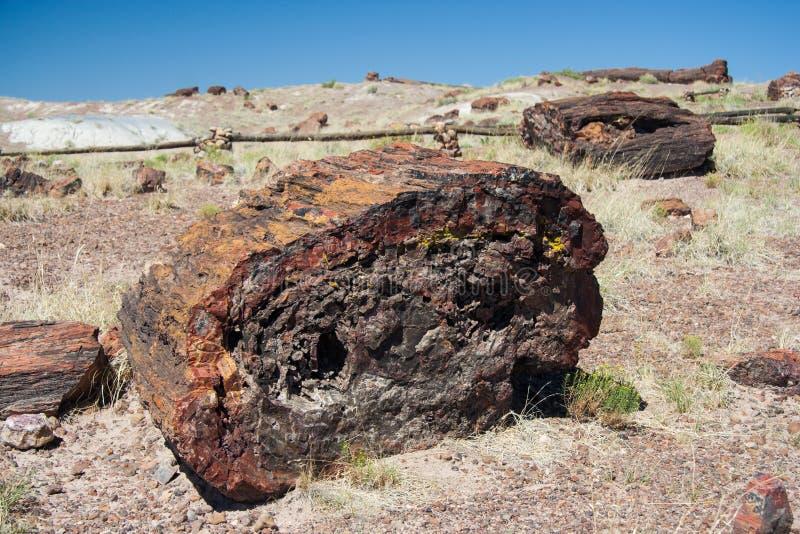 Van angst verstijfde boomstam in Van angst verstijfd Forest National Park Arizona de V.S. stock fotografie