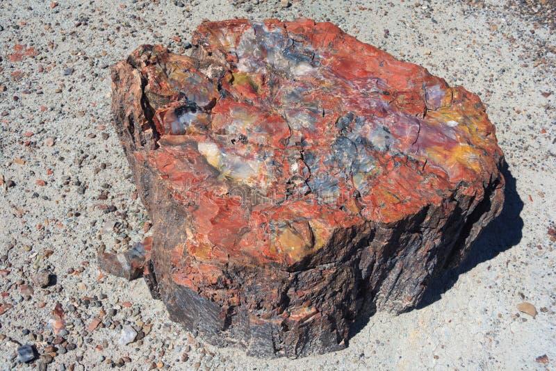 Van angst verstijfde boomstam in Van angst verstijfd Forest National Park Arizona de V.S. stock foto's