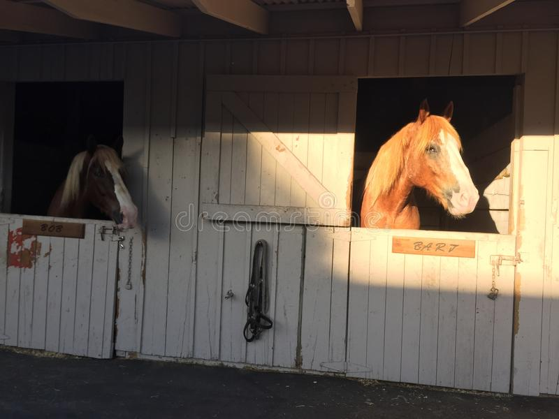 Van Californië de Medio Eerlijke San Luis Obispo County Horse hoofden van de Staat in boxen stock foto's