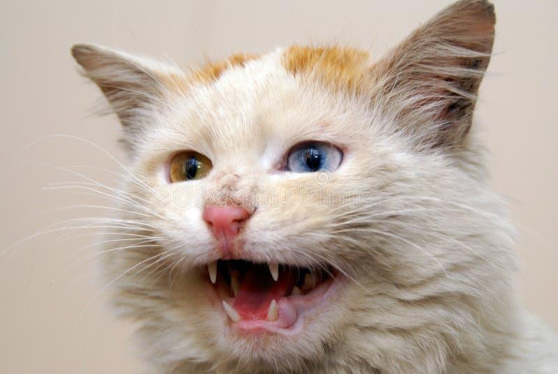 Van cat stockbilder